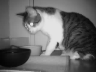 Picture of the camera: my cat eating
